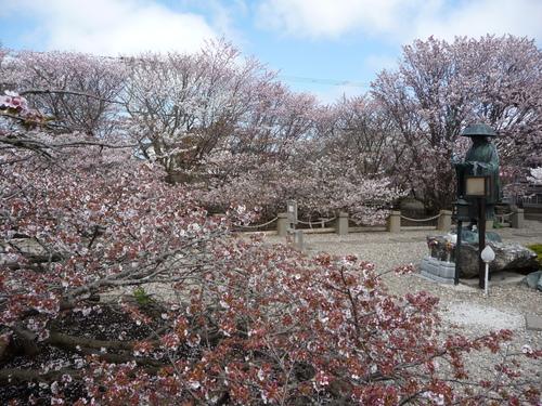 春 ・ ・ ・ かな?(根室より) 5月24日_f0113639_1630399.jpg