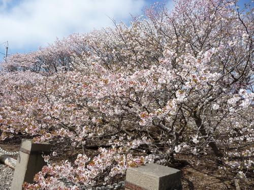 春 ・ ・ ・ かな?(根室より) 5月24日_f0113639_1638642.jpg
