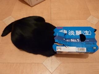 麒麟淡麗生猫 のぇる編。_a0143140_2243281.jpg