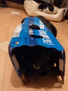 麒麟淡麗生猫 のぇる編。_a0143140_22435178.jpg