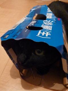 麒麟淡麗生猫 のぇる編。_a0143140_2246475.jpg