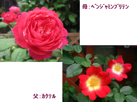 c0025140_21565198.jpg