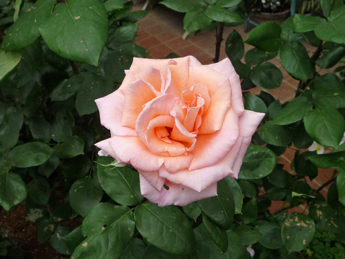 b0045357_834265.jpg