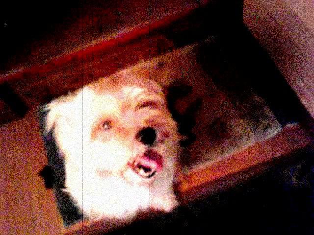 ワキュのぶろぐCM風動画:ペットホテルから失踪した迷子犬捜索中。_a0021565_20305878.jpg