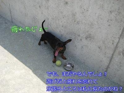 a0091865_8414995.jpg