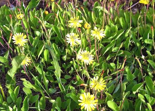 畦道に咲く花       _f0214527_10384451.jpg