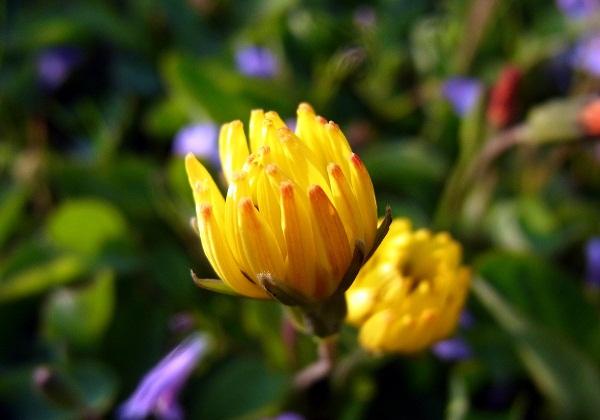 畦道に咲く花       _f0214527_1038613.jpg