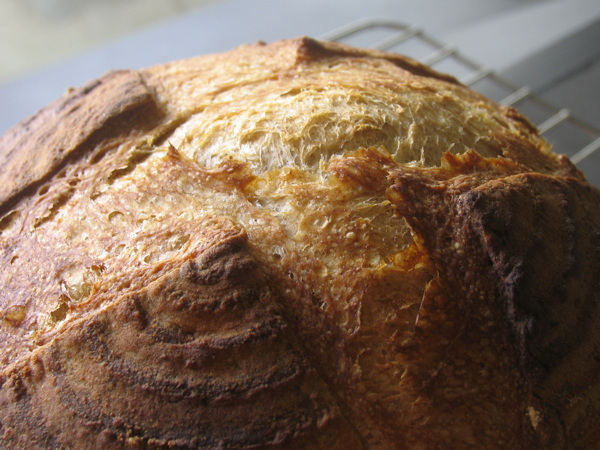 ひさしぶりにパンの写真。_d0027243_12533682.jpg