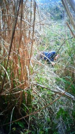 モグラの死体とニイニ。_b0128954_0243161.jpg