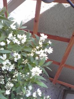 お花♪_c0033678_9313711.jpg