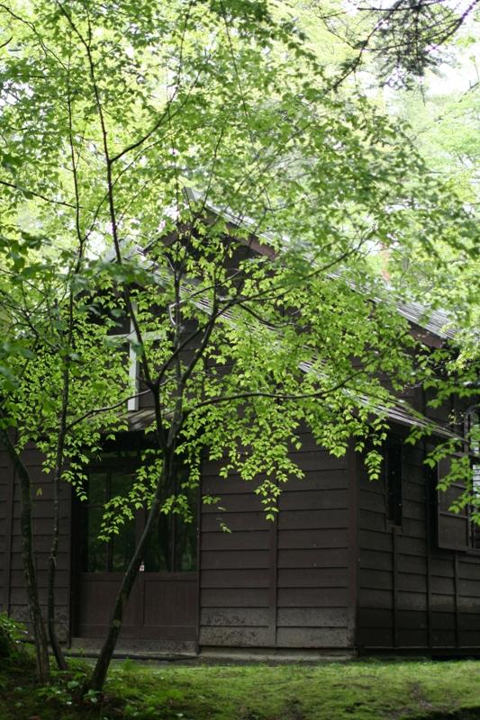木の葉の成長_f0091207_1472963.jpg