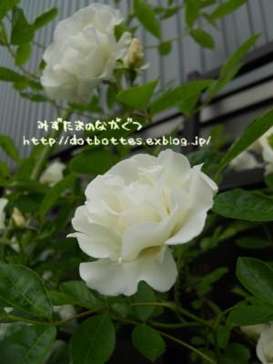 d0170109_2127249.jpg