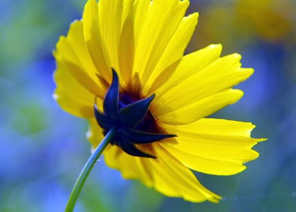公園内に咲く花と珍獣       _f0214527_22123529.jpg