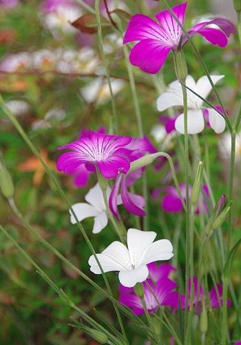 公園内に咲く花と珍獣       _f0214527_22193214.jpg