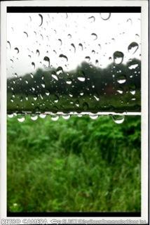 雨です。_e0144349_10101469.jpg