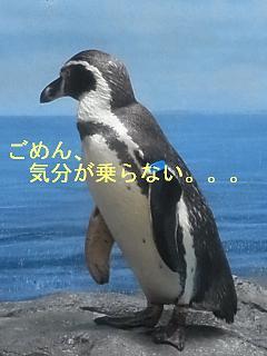 b0185771_17261060.jpg