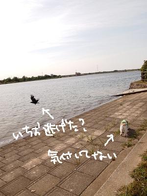 b0092580_1593933.jpg