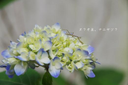 f0182781_13103297.jpg