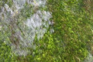 川をキレイにしたいって、思いました・・・_b0007182_19471766.jpg