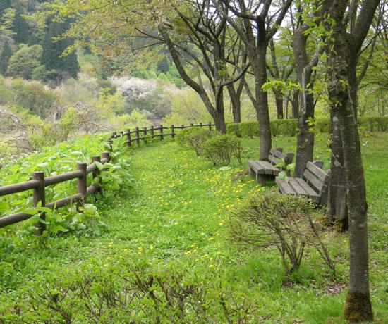 七滝の側のカエデのツボミ?と、 津軽街道の景色など_a0136293_19282592.jpg