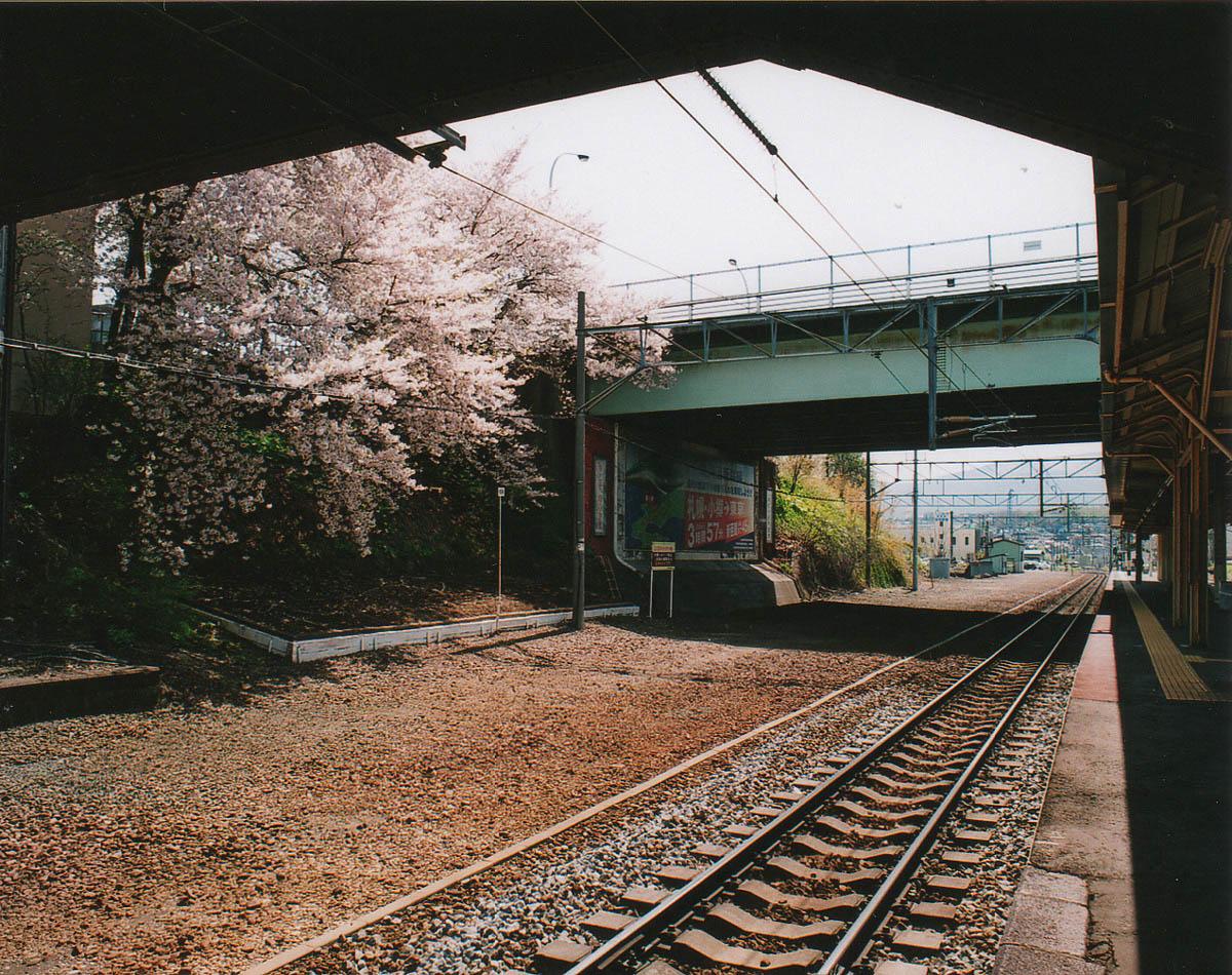 小樽散歩 51 「今年の桜」_b0103798_522342.jpg