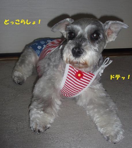 c0098501_20101888.jpg