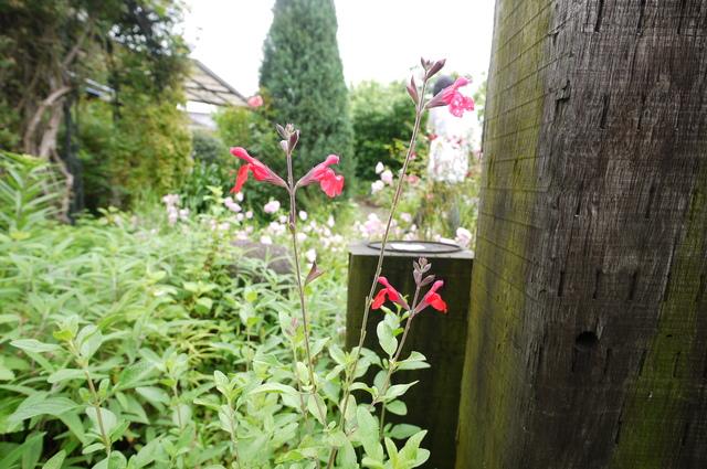O邸の庭に咲く花々_e0214805_18222922.jpg
