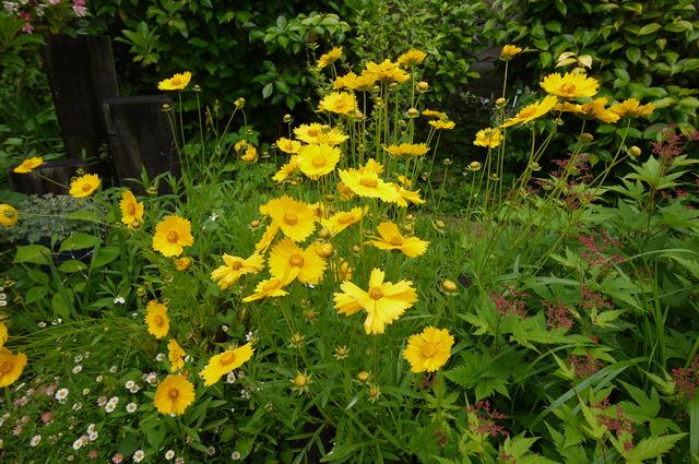 O邸の庭に咲く花々_e0214805_1823131.jpg