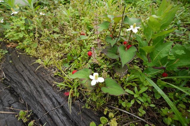 O邸の庭に咲く花々_e0214805_18232694.jpg