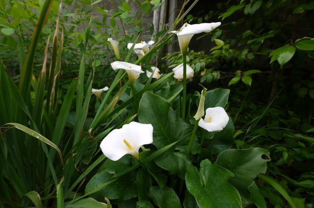 O邸の庭に咲く花々_e0214805_18243181.jpg