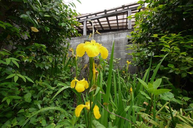 O邸の庭に咲く花々_e0214805_18244171.jpg