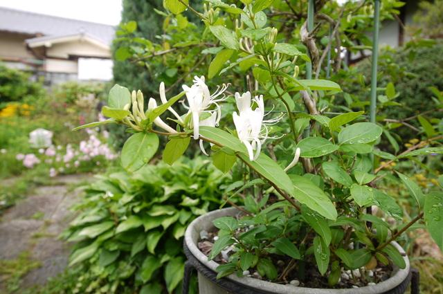 O邸の庭に咲く花々_e0214805_18254389.jpg