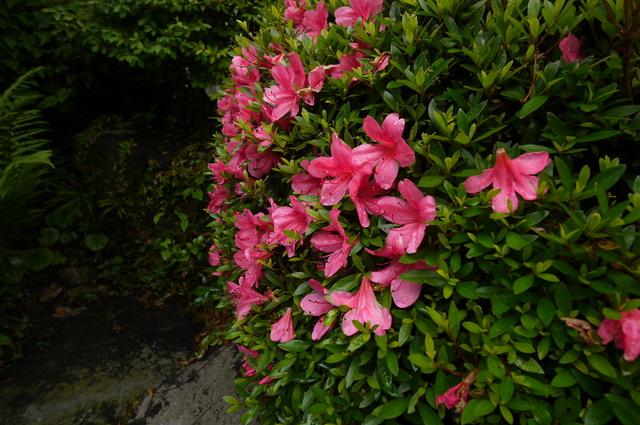 O邸の庭に咲く花々_e0214805_1826194.jpg