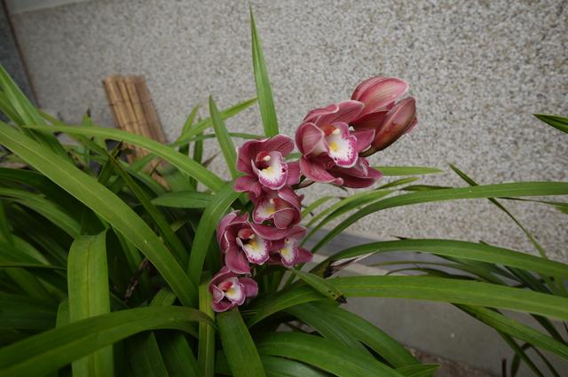 O邸の庭に咲く花々_e0214805_18263478.jpg