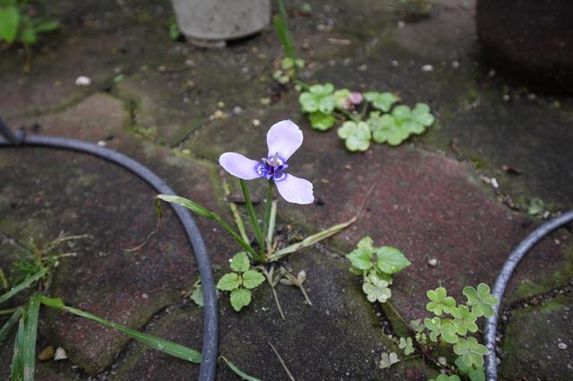 O邸の庭に咲く花々_e0214805_1826876.jpg