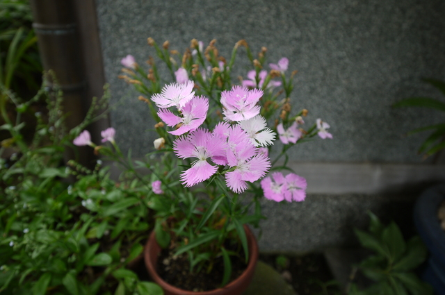 O邸の庭に咲く花々_e0214805_18273577.jpg