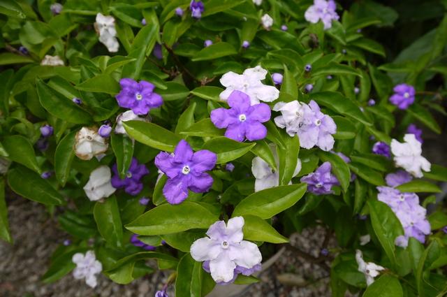 O邸の庭に咲く花々_e0214805_18274576.jpg