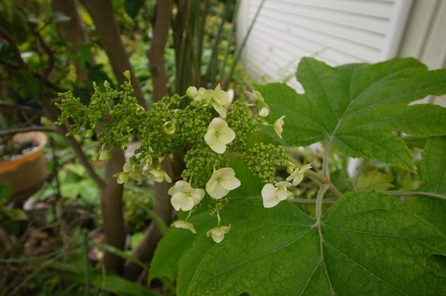 O邸の庭に咲く花々_e0214805_18275441.jpg