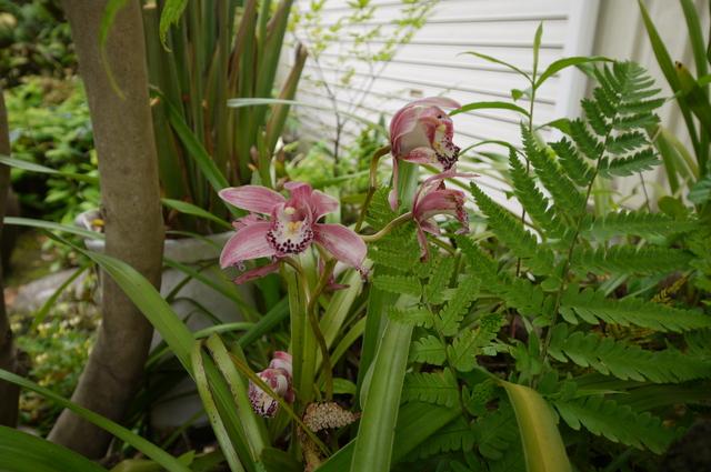 O邸の庭に咲く花々_e0214805_1828328.jpg
