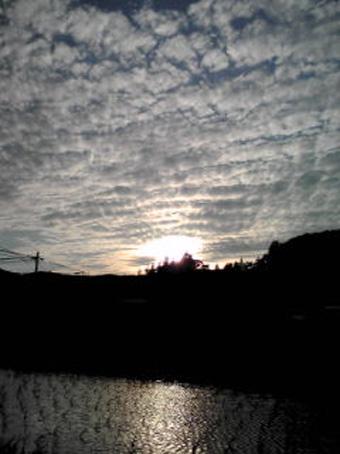 母が携帯電話で撮影した写真がまた届きました。           _c0195909_21251725.jpg