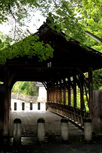 東福寺 深緑_e0048413_20502166.jpg