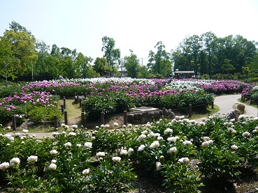 久宝寺公園_a0177314_185712.jpg