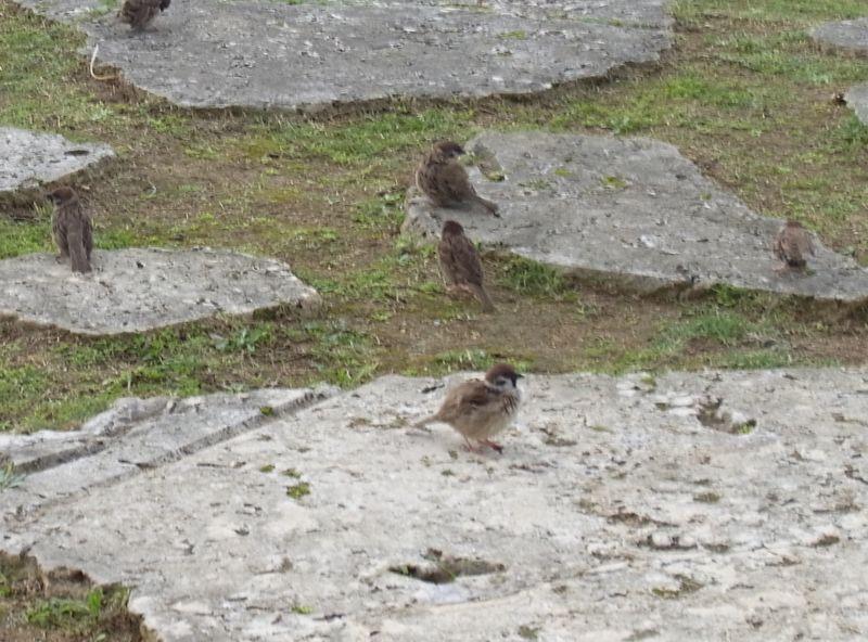 沖縄の動物たち_c0025115_197353.jpg