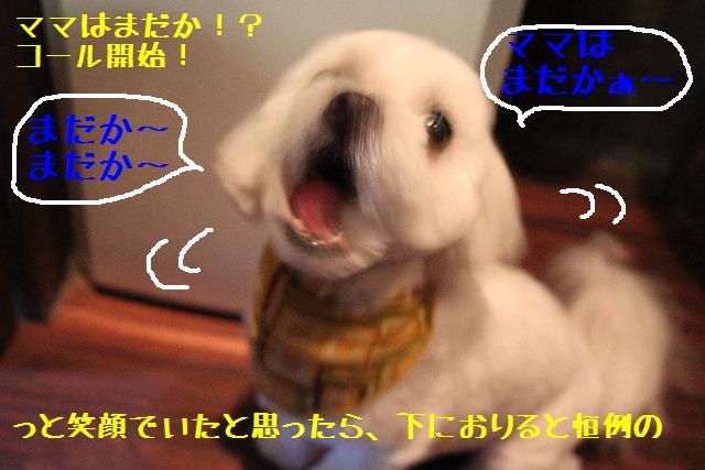 b0130018_17255592.jpg