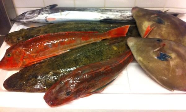 淡路島直送の魚 10_e0210422_1544337.jpg