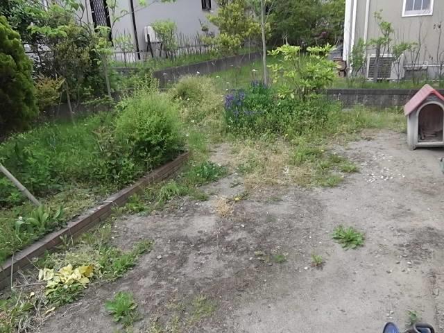 庭の草刈とカーポート洗浄_c0186441_20491587.jpg