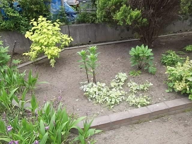 庭の草刈とカーポート洗浄_c0186441_20521649.jpg