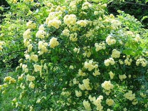 今日の花、外と内_d0165645_2042147.jpg
