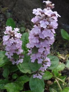 今日の花、外と内_d0165645_20484221.jpg