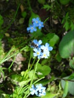 今日の花、外と内_d0165645_20505935.jpg